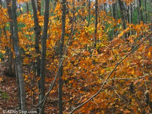 The autumn foliage along the Skyline Trail at Blue Hills