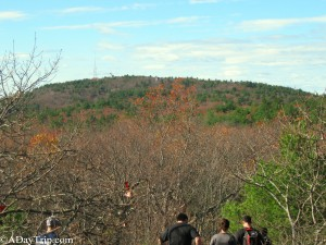 The Observation Tower really far in the distance at Blue Hills
