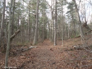 Wilson Mountain Reservation Dedham offers more than just hiking.