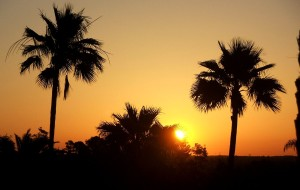 A beautiful sun rising over palm trees